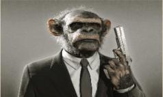 Prim Sistemine İsyan Eden Maymun