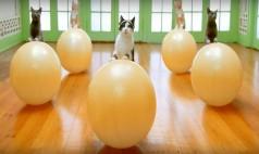 Kediseverlerin Bayılacağı Reklam Filmi